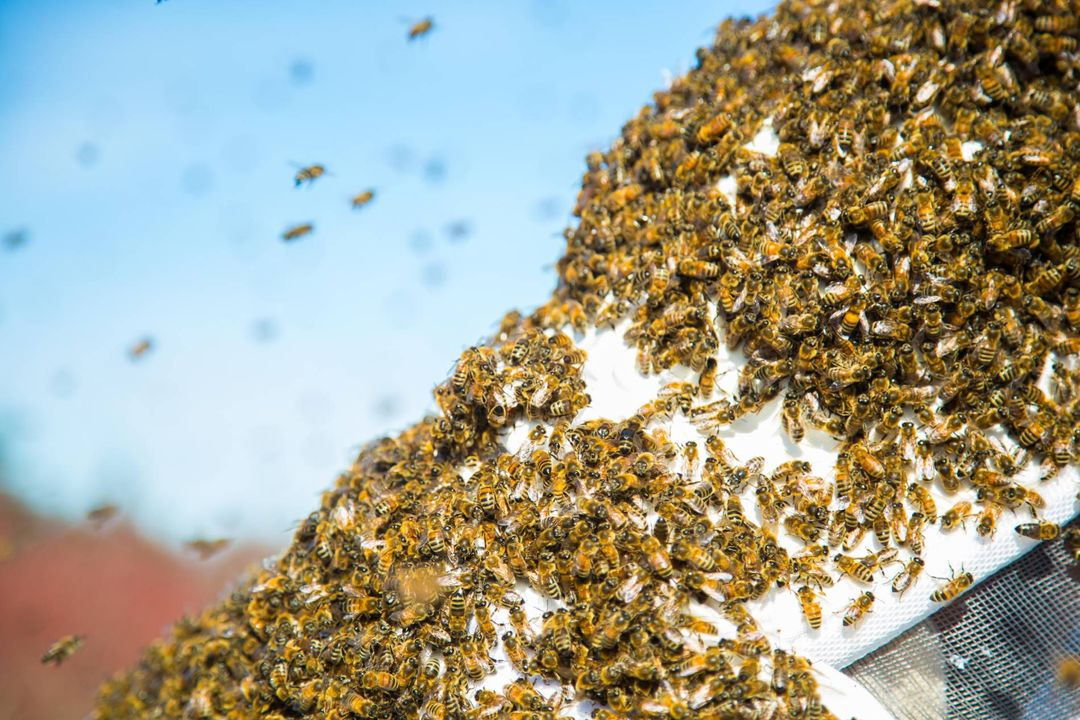 How to Survive a Bee-Swarm Attack